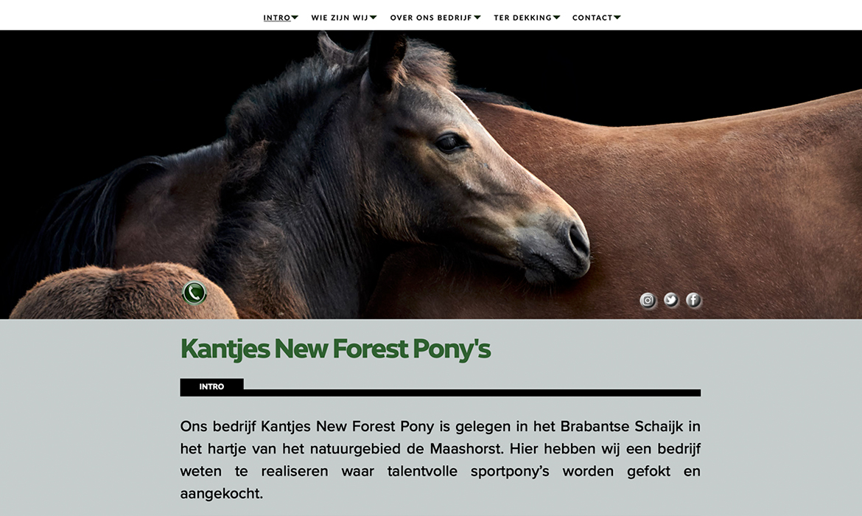 Webdesign voor Kantjes New Forest Pony's